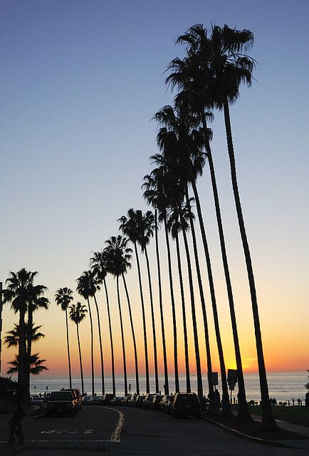 La Jolla Palm Trees, California | Flickr  this looks like the drive along the park at the cove.  my old study for school in the sun spot