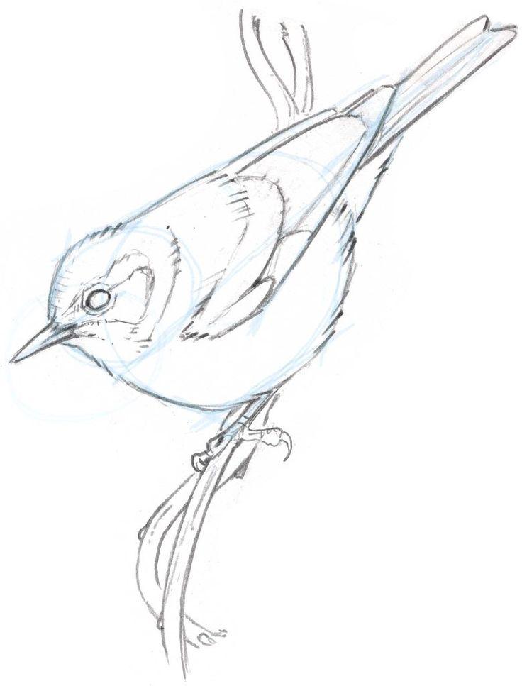 How to Draw an Orange-crowned Warbler step-by-step - John Muir Laws