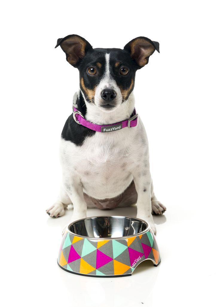 FuzzYard Pop Easy Feeder Pet Bowl