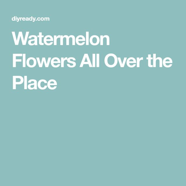 Watermelon Flowers All Over the Place