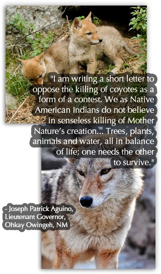 Stop Coyote-killing contest!  ABQ gun shop is sponsoring contest to kill coyotes to save tax dollars!  Unbelievable!  Act now.