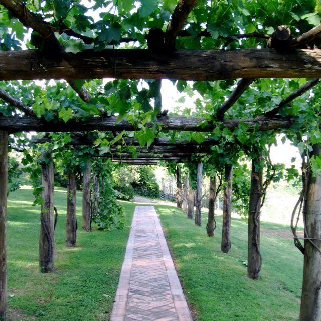Grape arbor walkway in 2020   Grape arbor, Pergola canopy ...