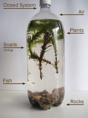 bottle ecosystem with parts labeled, and how to make it. This would be wonderful for kids to see and understand what an ecosystem actually is.