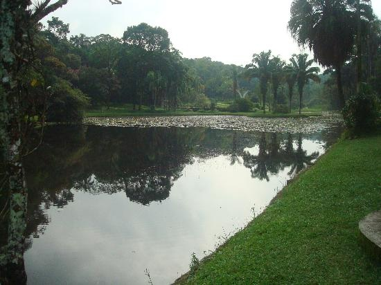 Jardim Botanico- A small rainforest in the heart of Sao Paulo, Brasil. I want to go here!