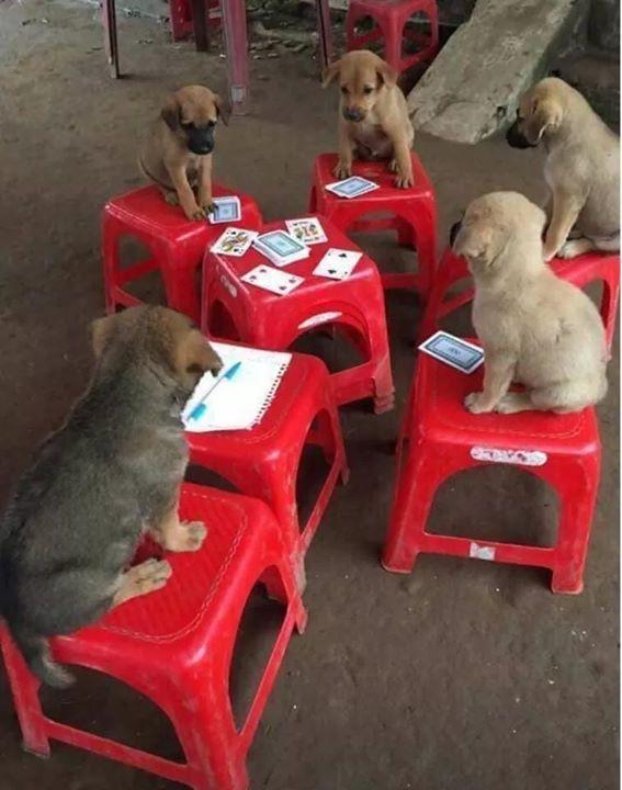 Vừa phát hiện ra tụ điểm đánh bài cực kỳVừa phát hiện ra tụ điểm đánh bài  cực kỳ lớn ???#muôn_màu_cuộc_sống   Dogs, Puppies, Animals