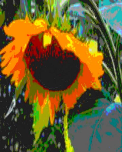 Sunflower on pinterest sunflowers the sunflower and field of