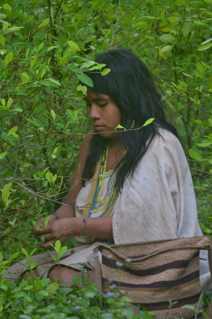 Mujer indígena recolectando coca magictourcolombia.com #ciudadperdidatour