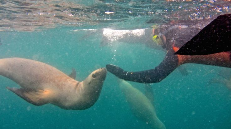 Snorkelling with Sea Lions! Patagonia, Argentina!