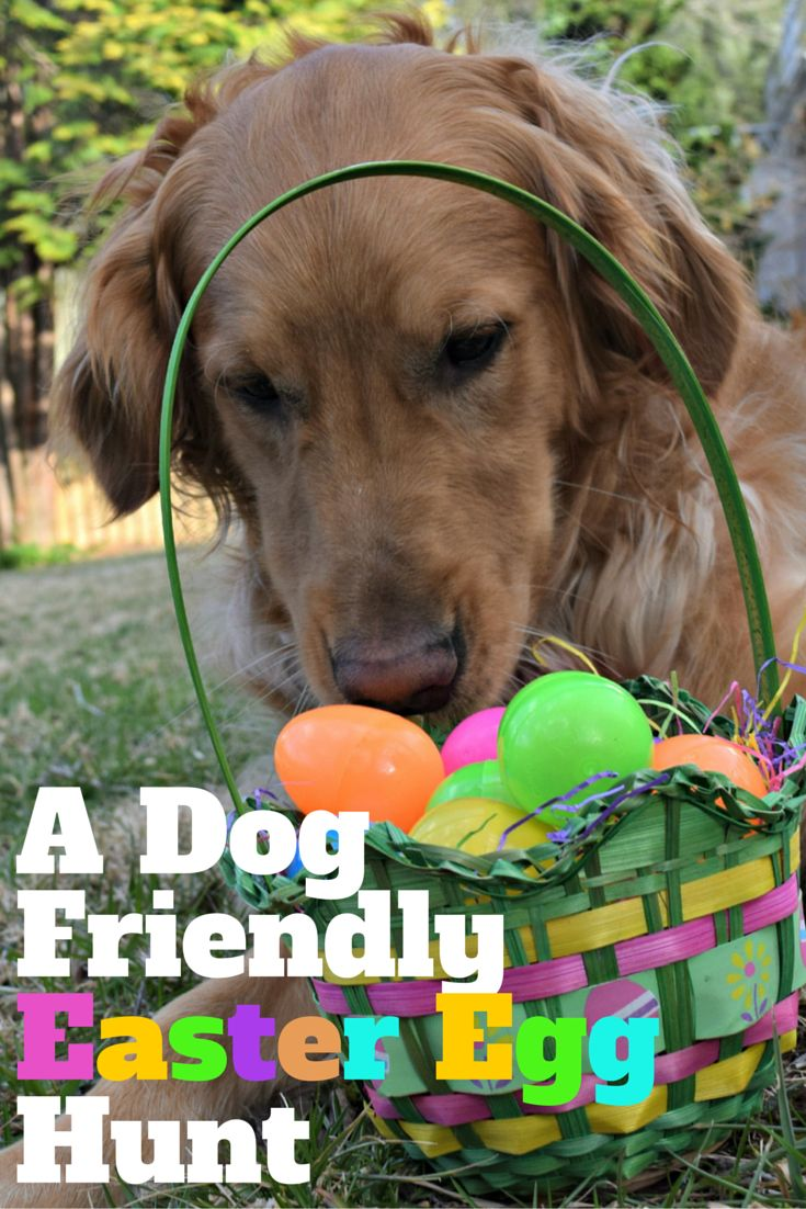See how @MyDogLikes and @chewy are teaming up to create a dog friendly easter egg hunt. Check out our review of @evangerspet beef tripe and enter the #giveaway too!