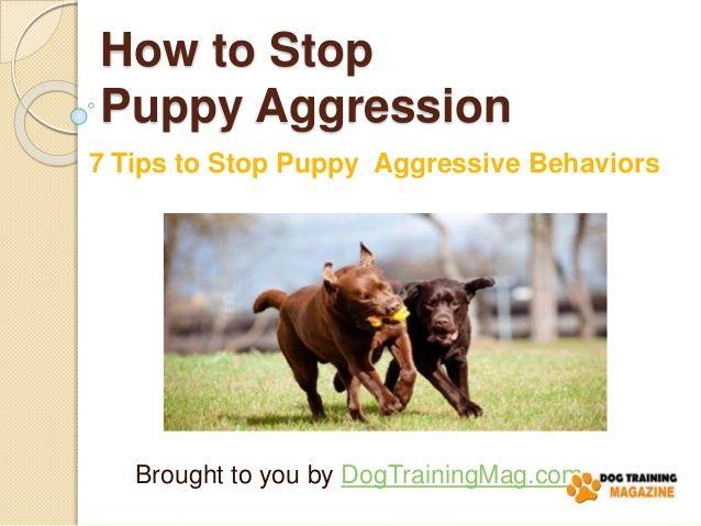 7 Tips to Stop Puppy Aggressive Behaviors by Dog Training Magazine via slideshare