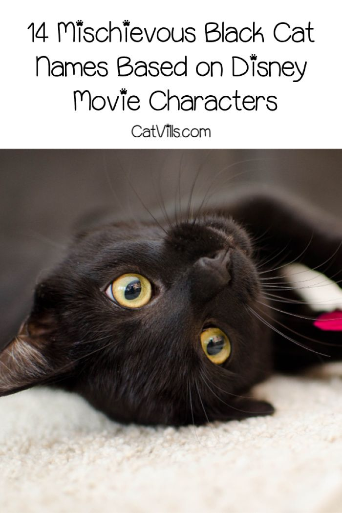 Top 75 Funniest Cat Names Ever Catvills Funny Cat Names Cute Cat Names Grey Cat Names