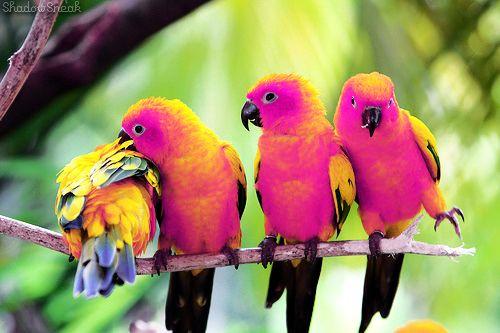 .: Orange, Natural Beautiful, Sun Conure, Parrots, Birds Photography, Birds Life, Colors Birds, Beautiful Birds, Bright Colors