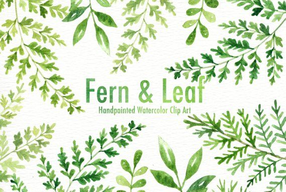Fern Leaf Watercolor Clipart Forest Leaves Clipart Green Leaf
