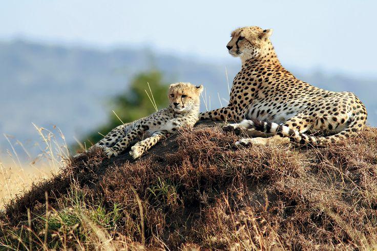 Kenya. Tra jungla e savana, tra boschi e deserti: un paradiso naturale!