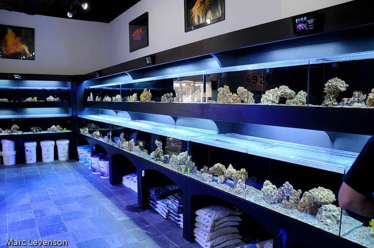 Fish Aquarium Shop | Marc - Assistant Webmaster