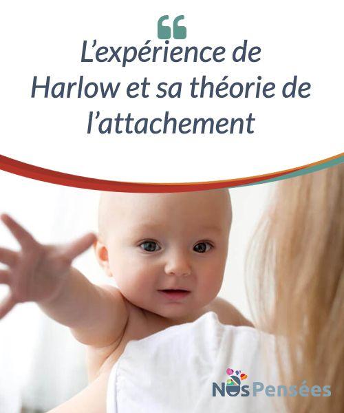 L'expérience de #Harlow et sa théorie de #l'attachement  La théorie de l'attachement se centre sur les phénomènes psychologiques qui se produisent lorsque nous établissons des liens affectifs avec les autres personnes. La manière dont nous le faisons serait conditionnée par la façon dont nos parents se sont liés avec nous durant notre enfance. #Curiosités