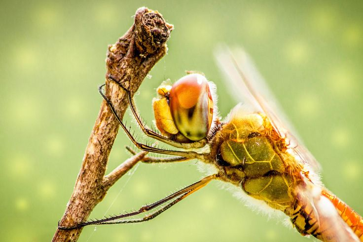 Dragonfly Close Up by snapshotdatabase on 500px