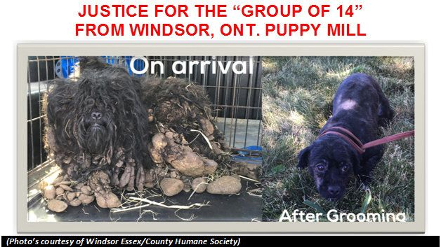 """JUSTICE FOR THE """"GROUP OF 14"""" FROM WINDSOR, ON PUPPY MILL https://www.change.org/p/justice-for-the-group-of-14-from-windsor-on-puppy-mill?utm_campaign=crowdfire&utm_content=crowdfire&utm_medium=social&utm_source=pinterest"""