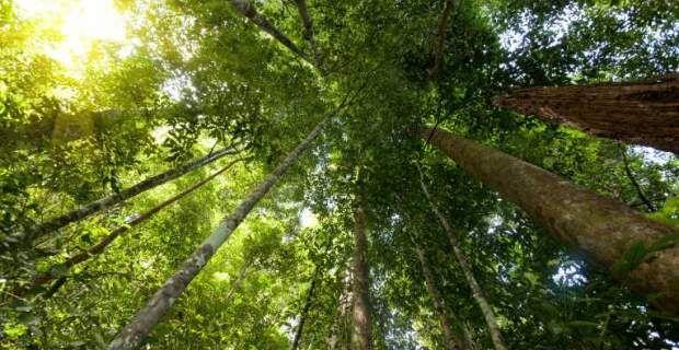 Νikolas: Πώς ο Άγιος Βαλεντίνος καταστρέφει τα τροπικά δάση...