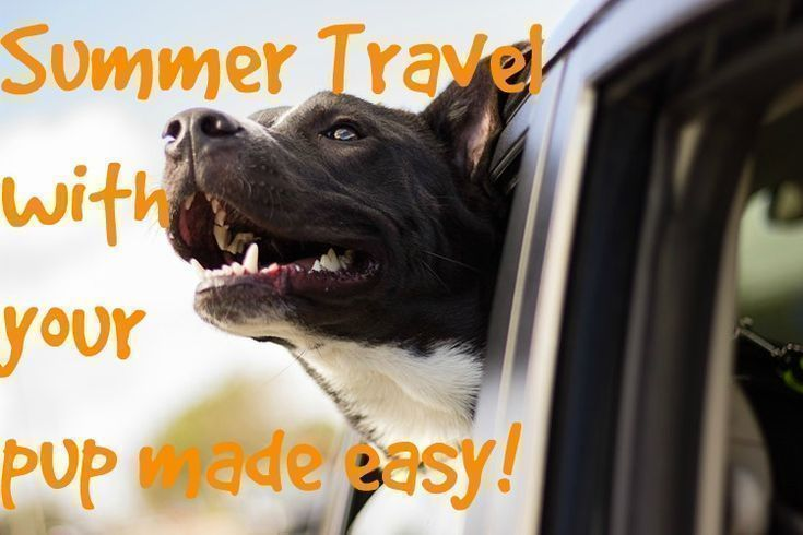 Summer Travel With Your Pup Dog Care Pet Insurance Reviews