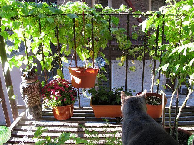 Pift altanen op klatreplanter, tomatplanter, krydderurter og ...