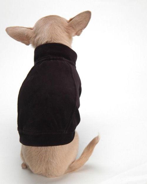 ♣️ Remember these Velour jackets... https://fifiandromeo.tumblr.com/post/166727850541
