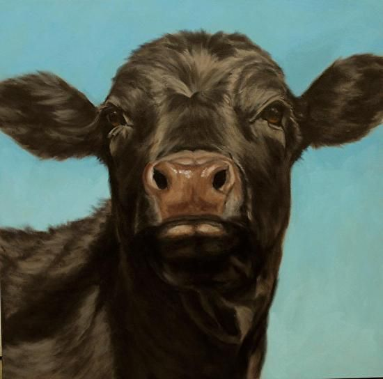Black Angus Portrait in oil, 36x36, more cow / cattle paintings coming soon! | A Fist Full of Brushes