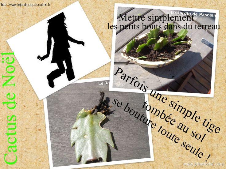 les 97 meilleures images propos de bouturer semer sur pinterest planters cactus et. Black Bedroom Furniture Sets. Home Design Ideas