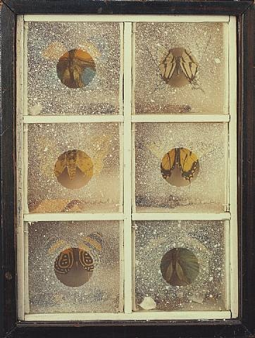 I should have been best friends with Joseph Cornell. Untitled (Butterfly Habitat) circa 1940