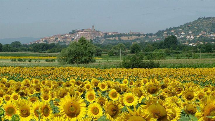tuscany httpwwwstepbystepcomglow glow pinterest