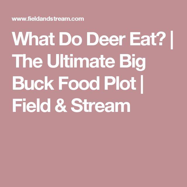 What Do Deer Eat? | The Ultimate Big Buck Food Plot | Field & Stream