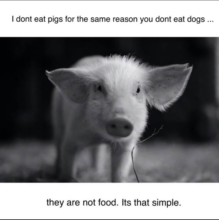I Don 39 T Eat Pigs For The Same Reason You Don 39 T Eat Dogs