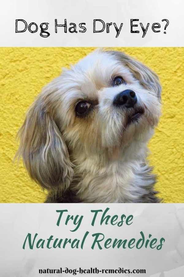 Dry Eye In Dogs Natural Dog Remedies Dry Eyes Dog Remedies