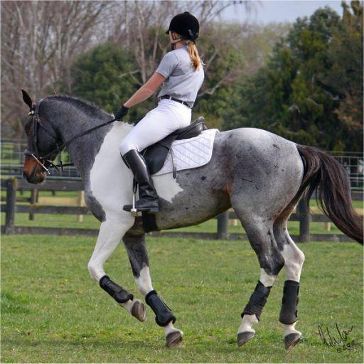 134 Best Sporthorses Images On Pinterest