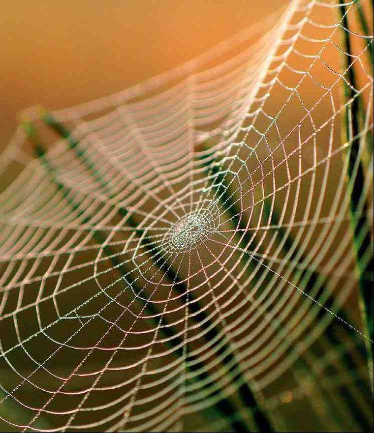 spider webs - Bing Images