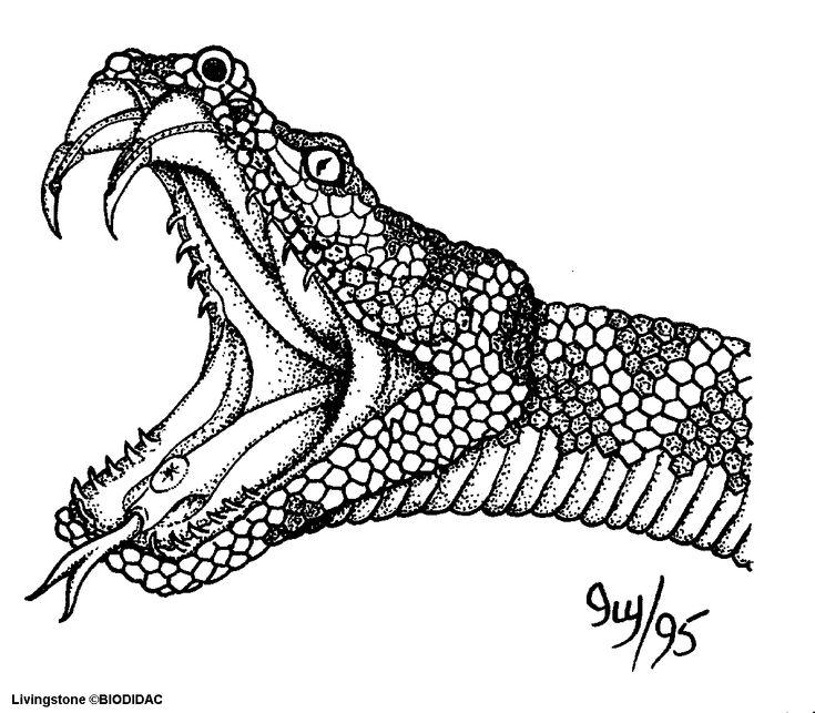 кора анаконда рисунки змеи грузов через границу