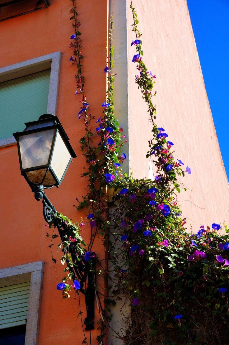 Inspiracje na dekoracje zewnętrzne z kwiatów. #hydrobox #hydroboxpl #kwiaty #flowers #flowerpot #homedecor #inspirations #greenhouse #greencity #green #nature #ideas #diy