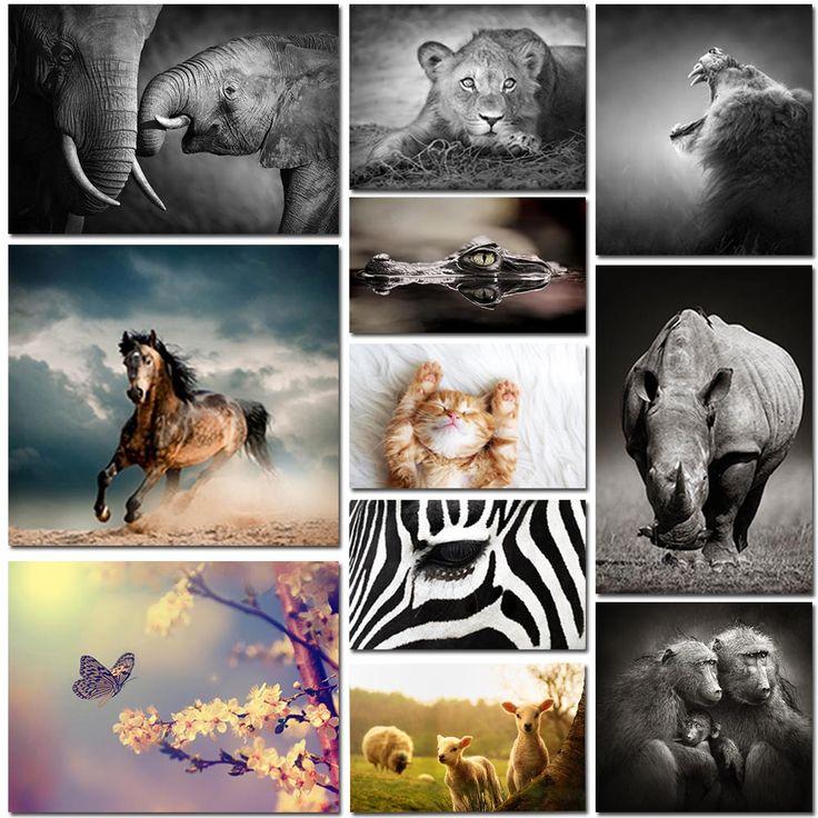 Vår samling av djurmotiv erbjuder vackra porträtt av populära djur såsom lejon, tigrar, elefanter, katter, hundar, hästar, björnar och marina djur m.fl.
