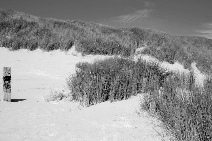Duinen op Ameland