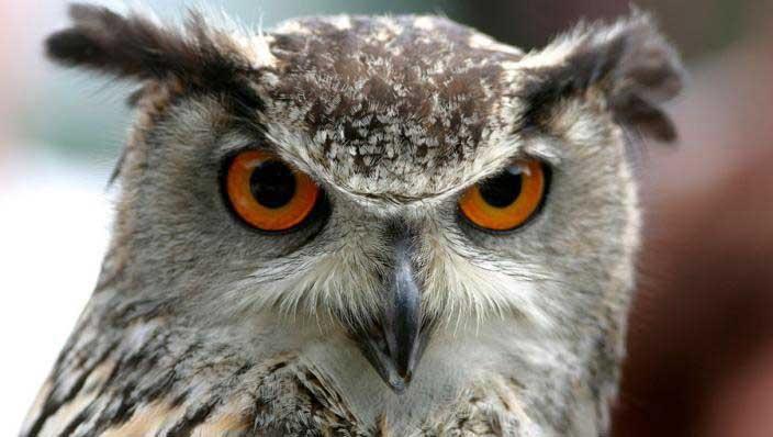 Dutch Terror Owl Strikes Again - Netherlands Tourism