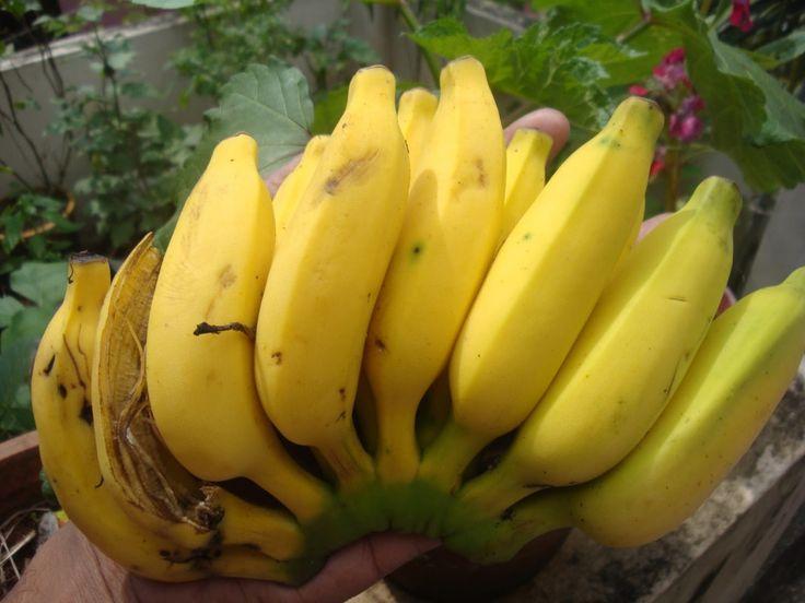 Vigyázzunk a banánnal? | Socialhealth