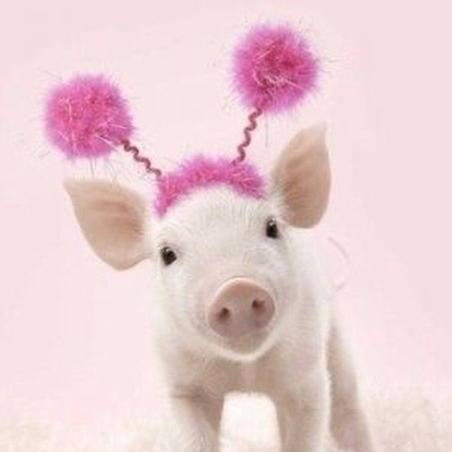 pretty in pink! pig