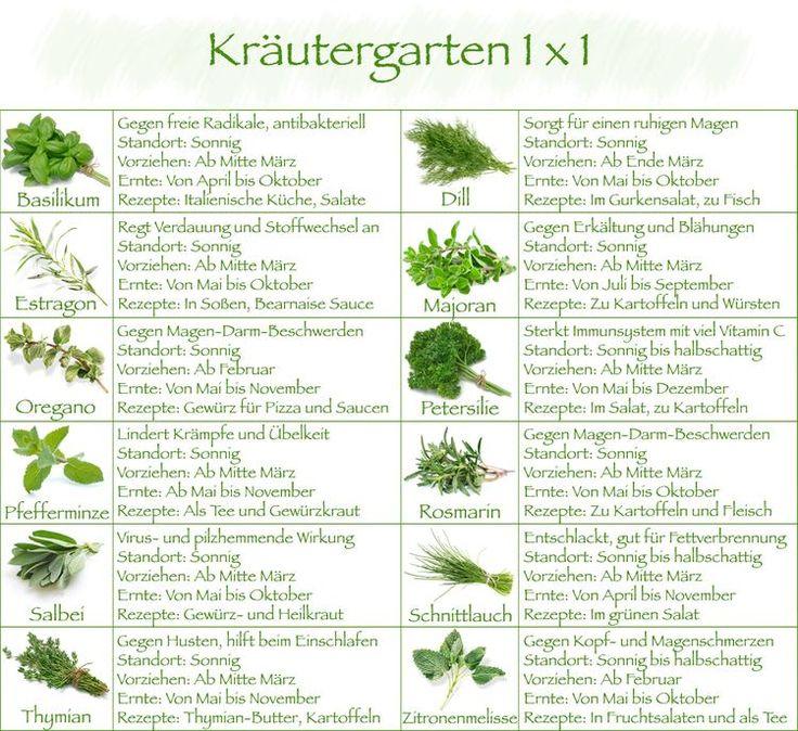 Kleines Kräutergarten Einmaleins   - Basilikum, Oregano, Pfefferminz für was sind die alle gut :-)