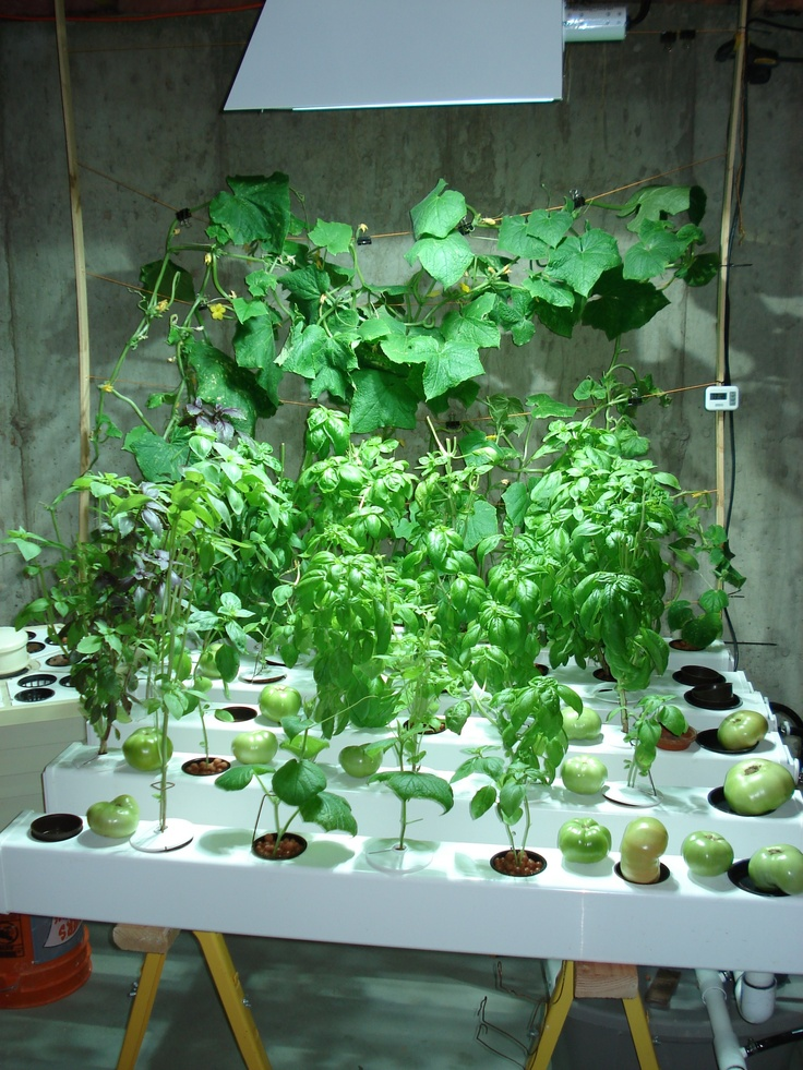 17 best images about plant grow lights on pinterest for Indoor gardening videos