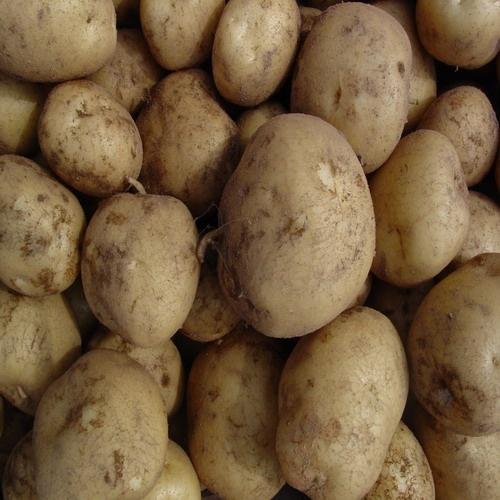 맛있는 감자