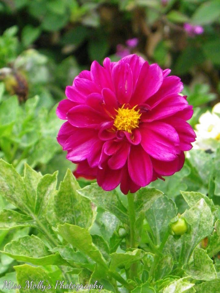 #pink #flower #folige #green #autumn #flowering #flowers #bright #contrast #focus #pretty #photography #photographer #photooftheday #creativity #effect