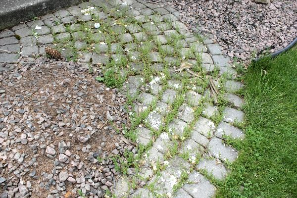 The most obvious weed killer and preventer ever. - The Creek Line House