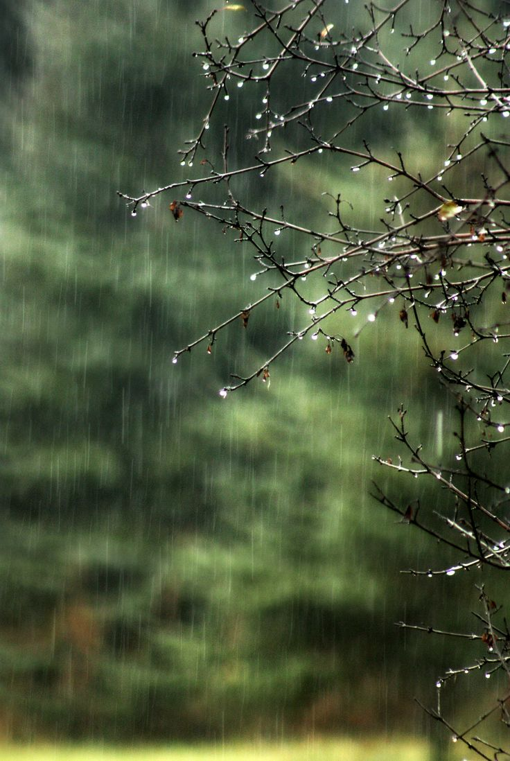 [CasaGiardino]  ♡  rain droplets collecting on the tips of twigs