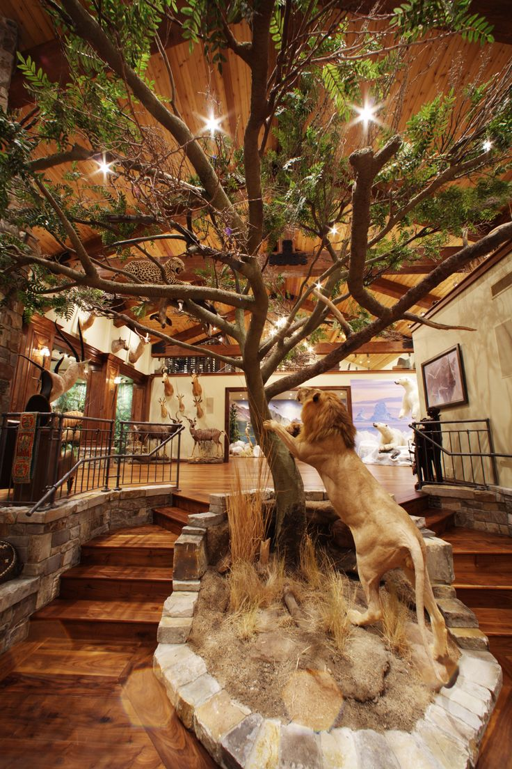 Gun room amp trophy room done hunting - Animal Artistry The Global Taxidermy Specialists