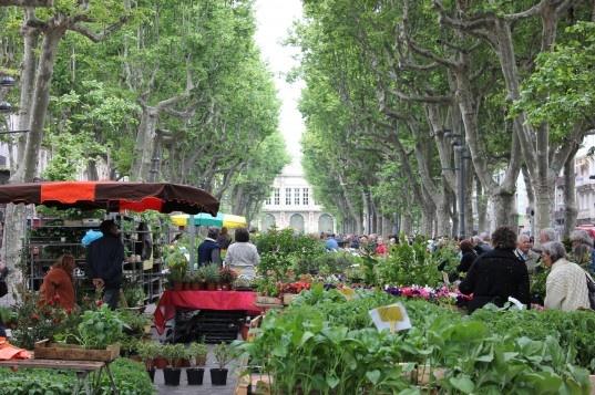 beziers_flower_market